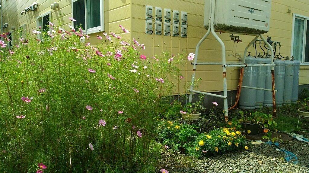 建物の周囲に花が植えられています♪