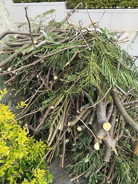 恵庭市で2019年も11月に剪定枝の無料回収を行います。