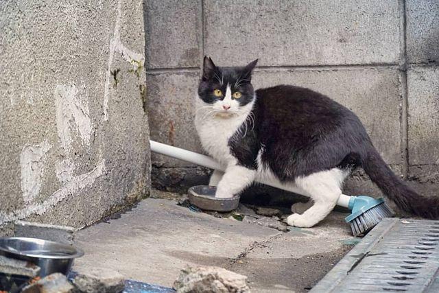 野良猫の餌付けで起きるトラブルと、対処、正しい対応とは?