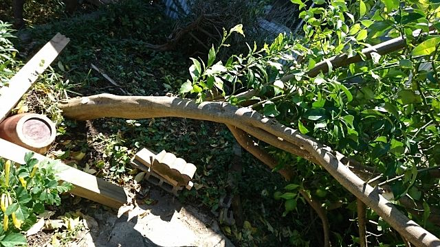 枝が伸びたり、風で倒れたり…庭木の管理をしましょう!