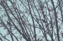 恵庭で見かける冬の野鳥